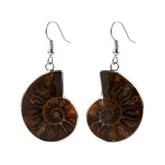 Ammonite Fossil Stone Charm Earrings with Copper Hooks Ammolite Cabochon Fashion Jewelry